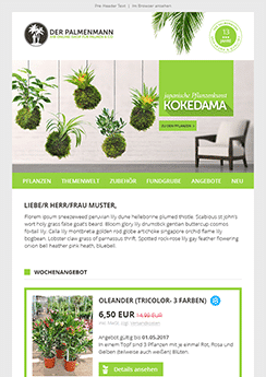 kokedama newsletter template