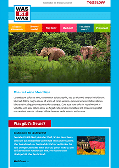 custom design newsletter elephants