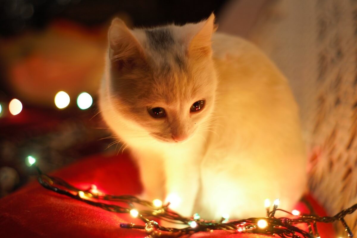 kitten crouching near christmas lights